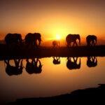 <h6>Wild Africa</h6>