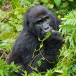 <h6>Wild Uganda</h6>