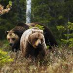 <h6>Wild Sweden</h6>