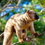 <h6>Madagaskar</h6>